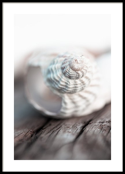 Seashell Poster in the group Posters & Prints / Photography at Desenio AB (10884)