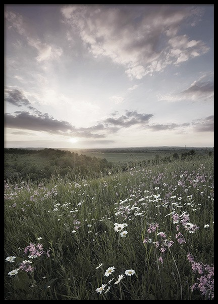 Meadow Sunset Poster in the group Posters & Prints / Nature at Desenio AB (10918)