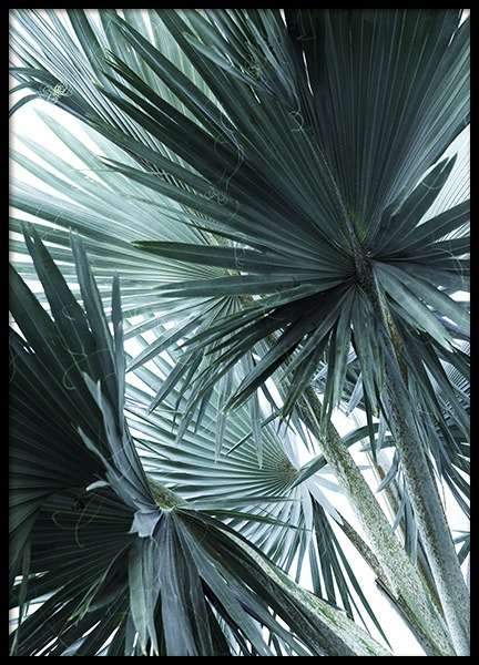 Mint Palms No3 Poster in the group Posters & Prints / Botanical at Desenio AB (10964)