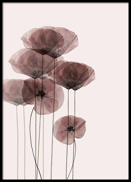 Poppy Bunch Poster