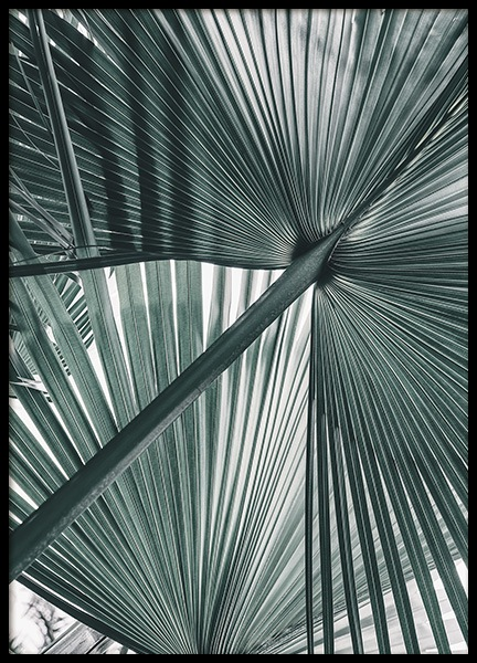Tropical Palm Leaves No1 Poster in the group Posters & Prints / Photography at Desenio AB (10979)