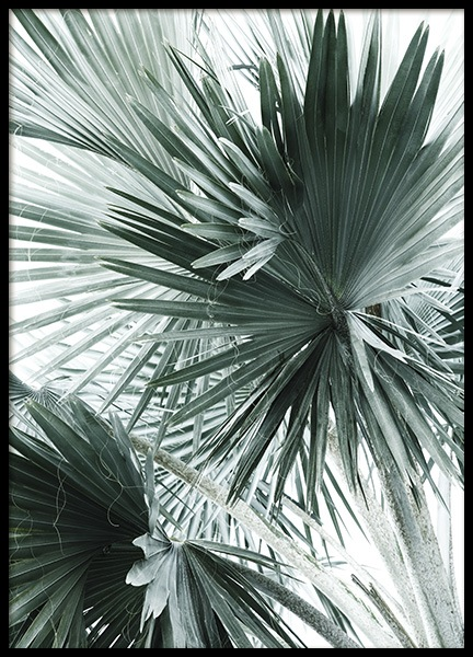 Tropical Palm Leaves No2 Poster in the group Posters & Prints / Botanical at Desenio AB (10980)