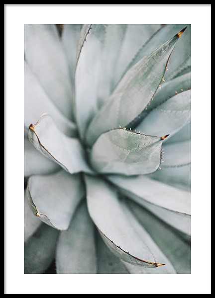 Aloe Vera Close Up Poster in the group Posters & Prints / Photography at Desenio AB (10981)