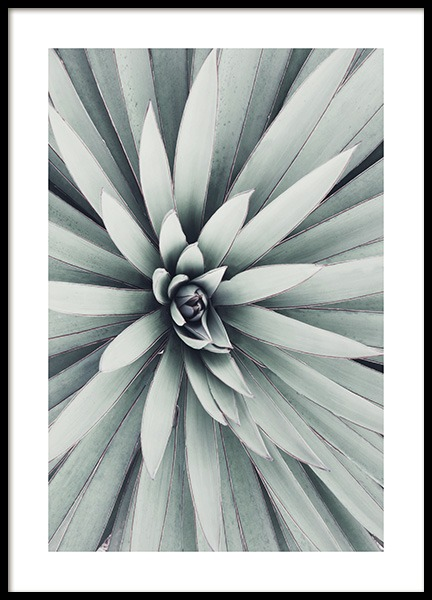 Spanish Dagger Leaves Poster in the group Posters & Prints / Botanical at Desenio AB (10984)