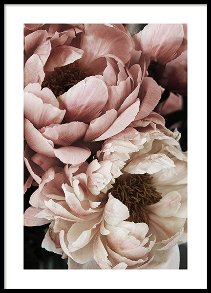 Coral Sunset Peony Poster in the group Posters & Prints / Photography at Desenio AB (10988)