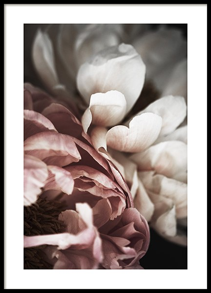 Pink and White Peony Poster in the group Posters & Prints / Photography at Desenio AB (10989)