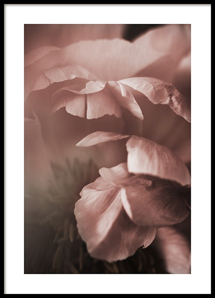 Soft Peony Poster