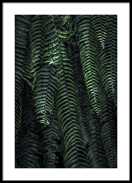 Forest Fern Poster in the group Posters & Prints / Photography at Desenio AB (11000)