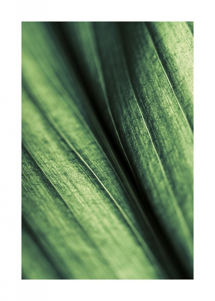 Green Leaf Poster in the group Posters & Prints / Botanical at Desenio AB (11004)