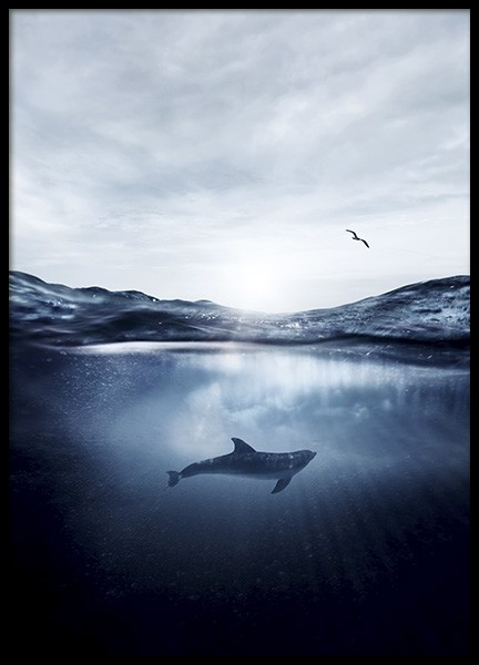 Dolphin Underwater Poster in the group Posters & Prints / Nature at Desenio AB (11049)