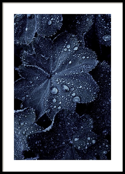 Raindrops on Blue Leaves Poster in the group Posters & Prints / Botanical at Desenio AB (11052)