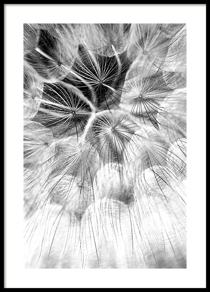 Dandelion Dreams Poster in the group Posters & Prints / Black & white at Desenio AB (11179)