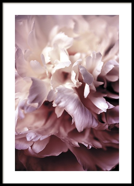 Peony Close Up Poster in the group Posters & Prints / Botanical at Desenio AB (11186)