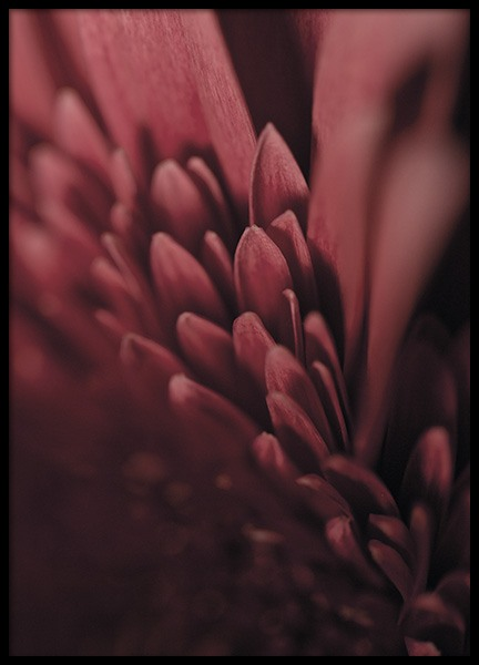 Burgundy Flower Close Up Poster
