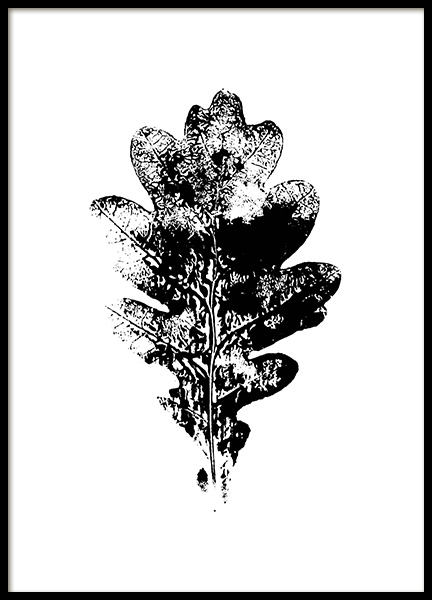 Oak Leaf Poster in the group Posters & Prints / Botanical at Desenio AB (11220)