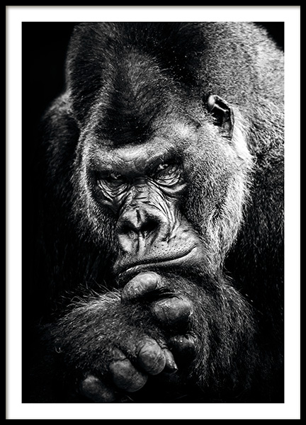 Gorilla Poster in the group Posters & Prints / Black & white at Desenio AB (11255)