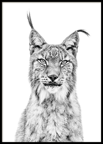 Lynx Poster in the group Posters & Prints / Black & white at Desenio AB (11257)