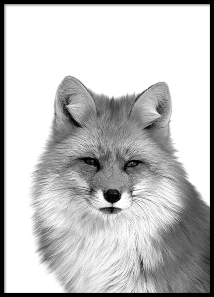 Fox B&W Poster in the group Posters & Prints / Insects & animals at Desenio AB (11258)