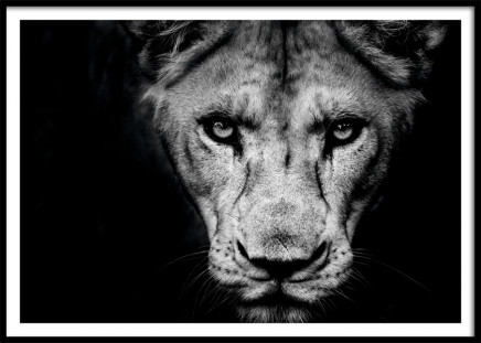 Lioness Close Up Poster in the group Posters & Prints / Black & white at Desenio AB (11259)
