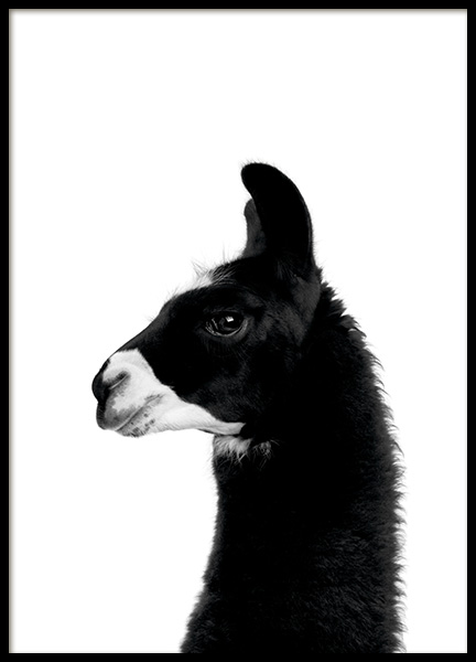 Lama Poster in the group Posters & Prints / Black & white at Desenio AB (11260)