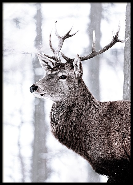 King Deer Poster in the group Posters & Prints / Insects & animals at Desenio AB (11419)