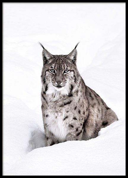 Snow Lynx Poster in the group Posters & Prints / Photography at Desenio AB (11421)