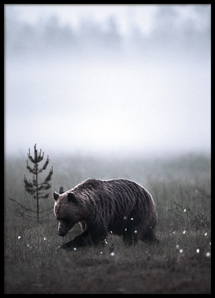Meadow Bear Poster in the group Posters & Prints / Insects & animals at Desenio AB (11422)