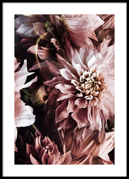 Wall of Dahlias Poster in the group Posters & Prints / Photography at Desenio AB (11501)