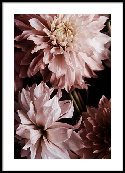 A Pair of Dahlias Poster in the group Posters & Prints / Photography at Desenio AB (11503)