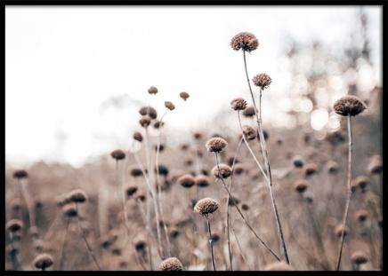 Monochrome Flowers Poster