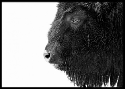 Black Buffalo Poster in the group Posters & Prints / Insects & animals at Desenio AB (11547)