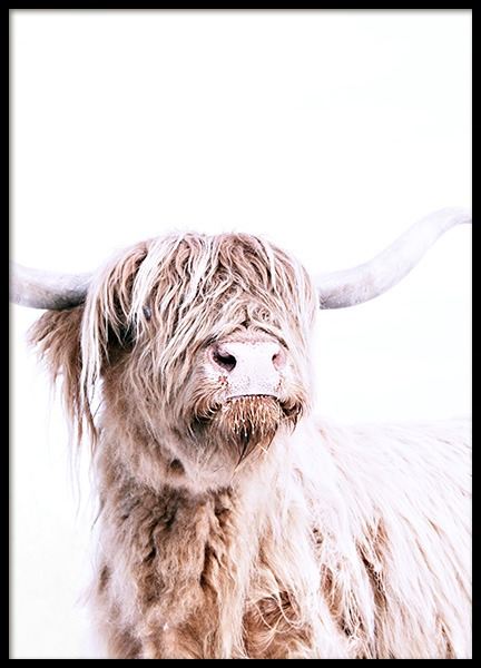 Highland Cattle Portrait Poster in the group Posters & Prints / Insects & animals at Desenio AB (11550)