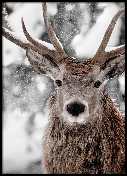 Winter Stag Poster in the group Posters & Prints / Insects & animals at Desenio AB (11554)