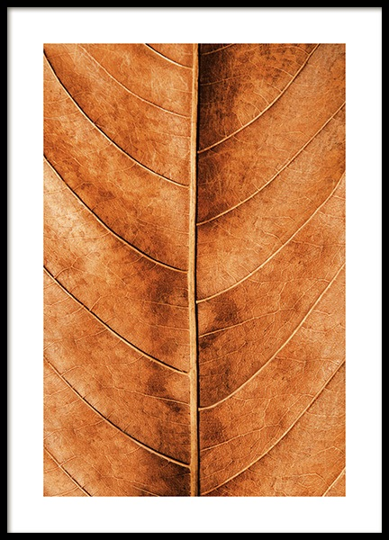 Autumn Leaf Poster in the group Posters & Prints / Nature at Desenio AB (11575)