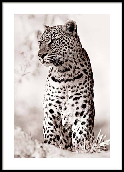 Leopard in the Wild Poster in the group Posters & Prints / Photography at Desenio AB (11622)