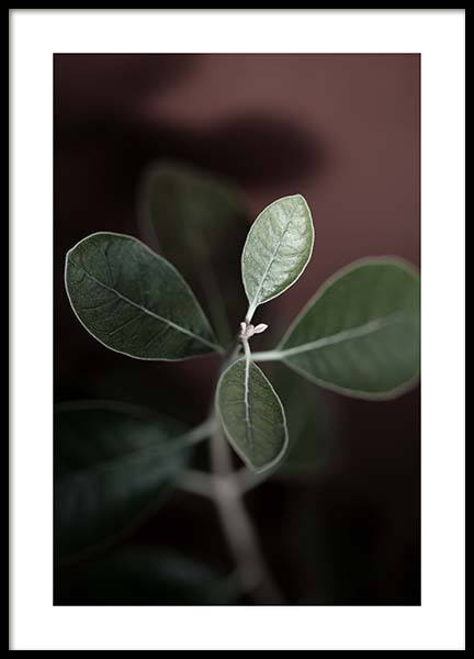 Tiny Leaves No2 Poster in the group Posters & Prints / Sizes / 50x70cm | 20x28 at Desenio AB (11655)