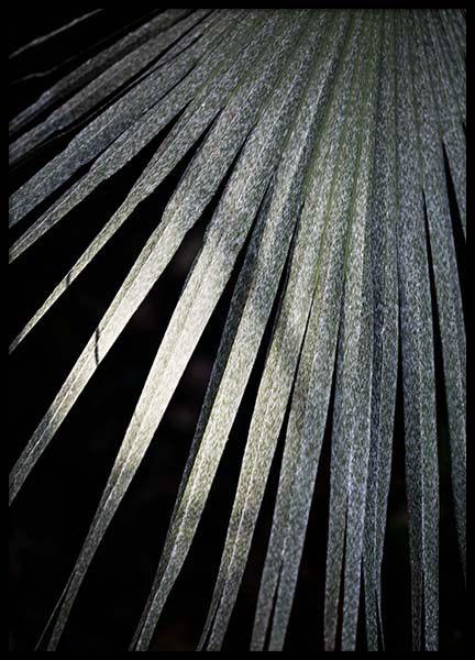 Taraw Palm Leaf Poster