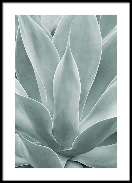 Agave Leaves No1 Poster