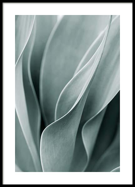 Agave Leaves No3 Poster