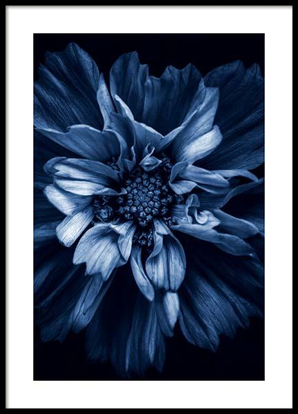 Blue Anemone Poster in the group Posters & Prints / Photography at Desenio AB (11663)