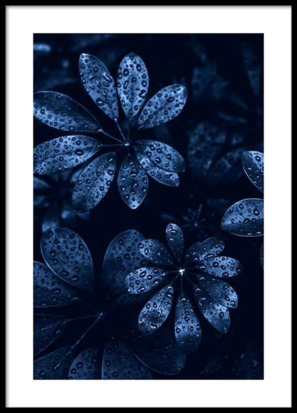 Raindrops on Leaves Poster in the group Posters & Prints / Photography at Desenio AB (11664)