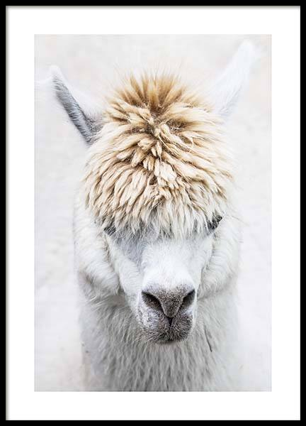White Alpaca Poster in the group Posters & Prints / Photography at Desenio AB (11668)
