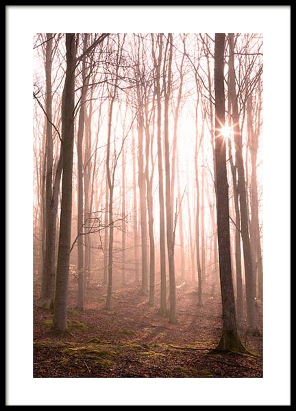 Forest in Fog Poster in the group Posters & Prints / Nature at Desenio AB (11713)