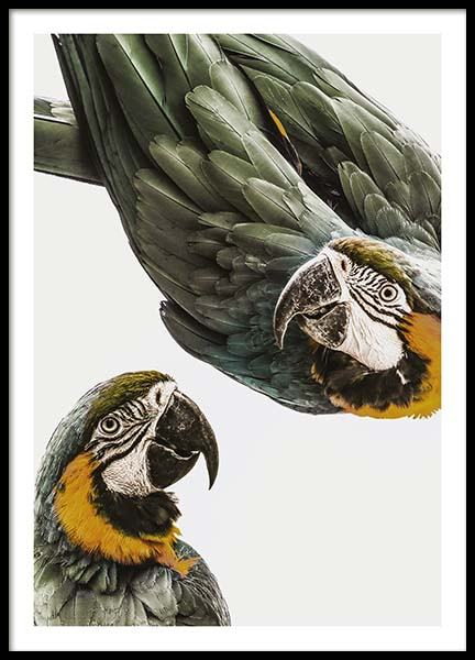 Parrots Poster in the group Posters & Prints / Photography at Desenio AB (11733)
