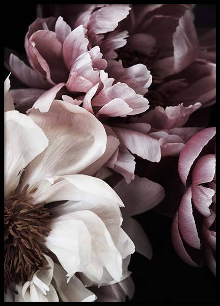 Dreamy Peony No1 Poster in the group Posters & Prints / Botanical at Desenio AB (11775)