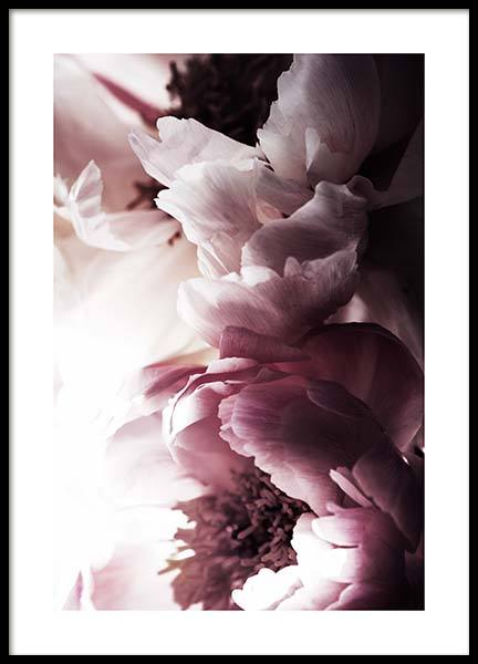 Dreamy Peony No2 Poster in the group Posters & Prints / Botanical at Desenio AB (11776)