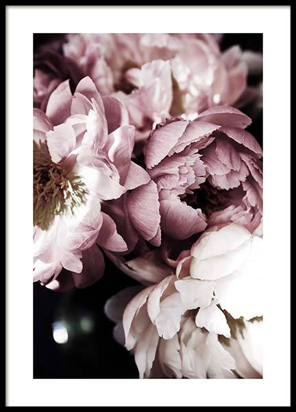 Dreamy Peony No3 Poster in the group Posters & Prints / Photography at Desenio AB (11777)