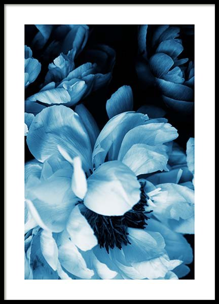 Blue Peony No1 Poster in the group Posters & Prints / Photography at Desenio AB (11778)