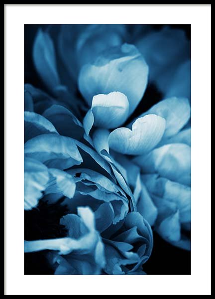 Blue Peony No3 Poster in the group Posters & Prints / Botanical at Desenio AB (11780)