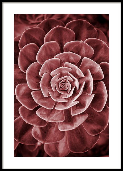 Red Succulent No2 Poster in the group Posters & Prints / Photography at Desenio AB (11789)